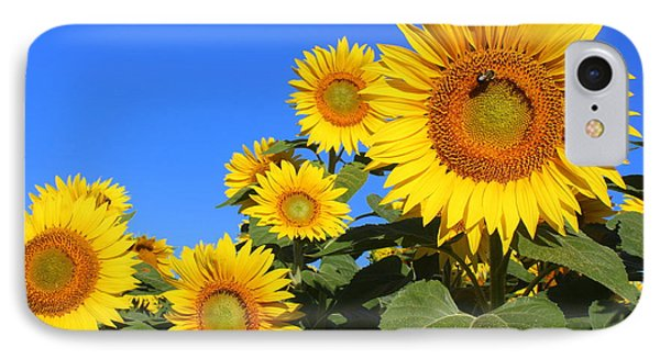 Sunflowers In Blue IPhone Case