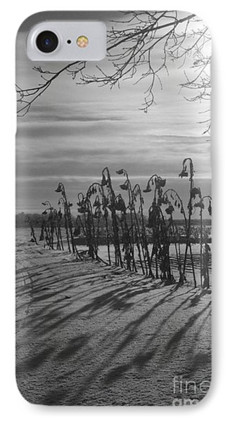 Sunflowers In The Winter Sun IPhone Case