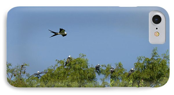 Swallow-tailed Kite Flyover IPhone Case