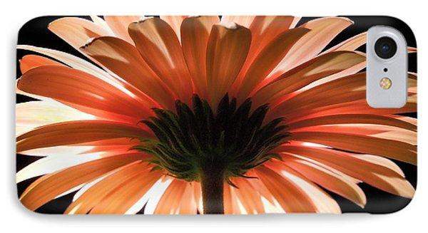 Tangerine Gerber Daisy IPhone Case