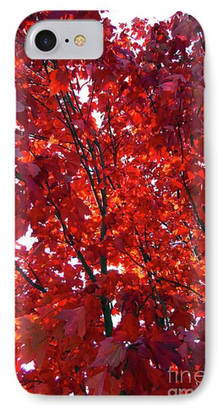 Tennessee Trees 3 IPhone Case