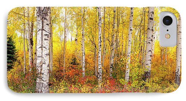 The Beauty Of The Autumn Forest IPhone Case