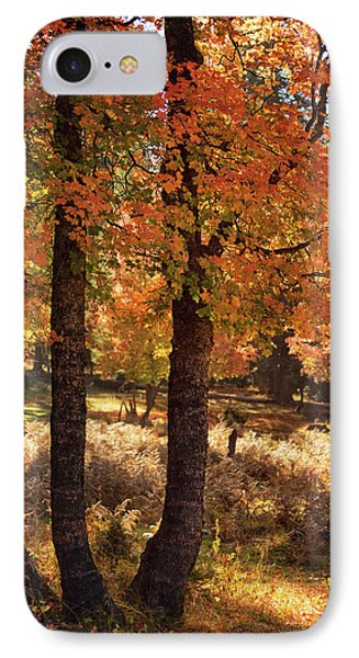 IPhone Case featuring the photograph The Colors Of An Autumn Forest  by Saija Lehtonen