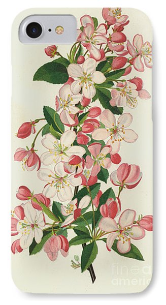 The Copious Flowered Crab, Pyrus Malus Floribunda IPhone Case