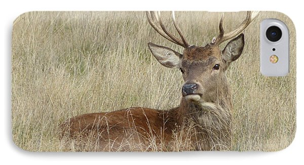 The Gentle Stag IPhone Case