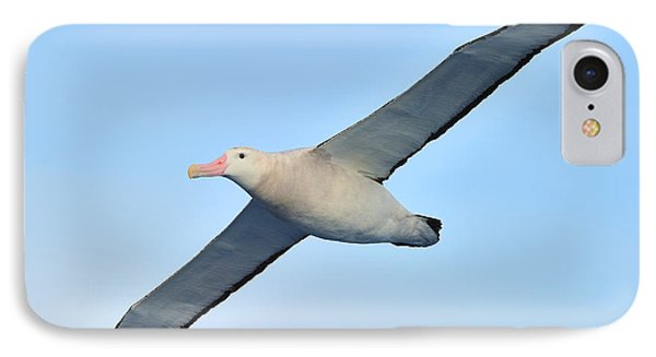 The Greatest Seabird IPhone Case