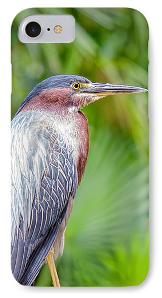 The Green Heron IPhone Case