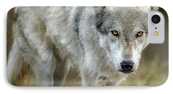 The Grey Wolf Shake IPhone Case