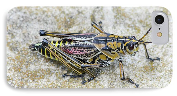 The Hopper Grasshopper Art IPhone Case