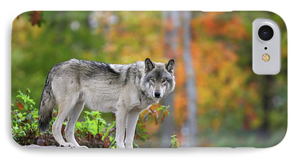 The Wolf. IPhone Case