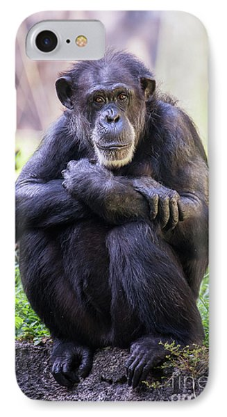 Thoughtful Chimpanzee  IPhone Case