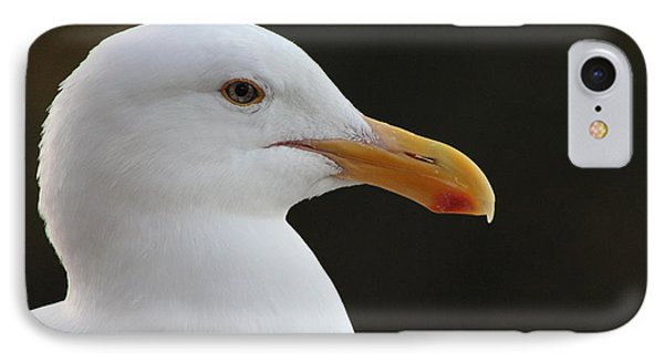 Thoughtful Gull IPhone Case