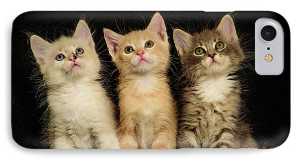 Three Wee Kittens IPhone Case
