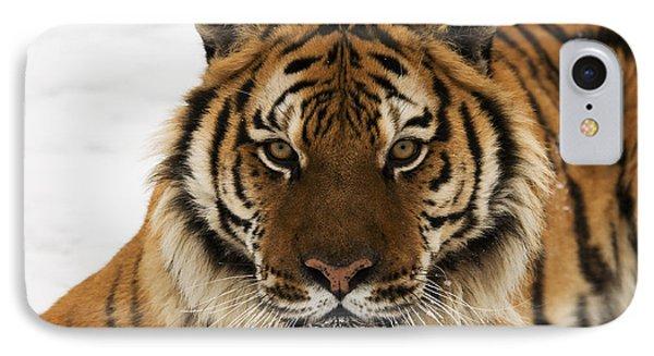 Tiger Stare IPhone Case