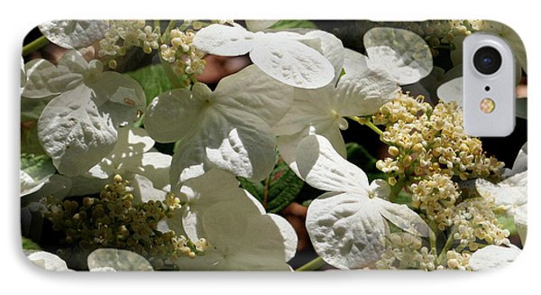 Tiled White Lace Cap Hydrangeas IPhone Case