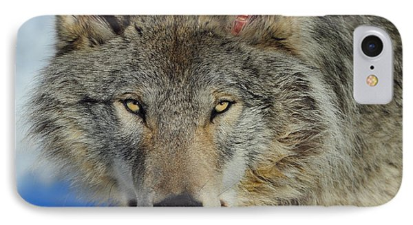 Timber Wolf Portrait IPhone Case