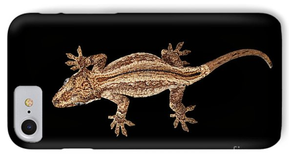 Top View Of Gargoyle Gecko, Rhacodactylus Auriculatus Staring Isolated On Black Background. Native T IPhone Case