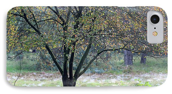 Tree In Forest With Autumn Colors IPhone Case