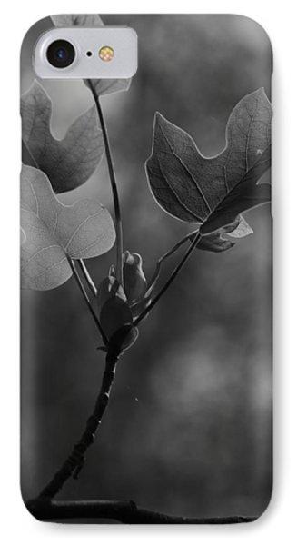Tulip Tree Leaves In Spring IPhone Case