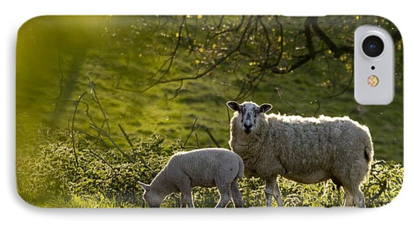 Sheep iPhone 8 Case - Under The Setting Sun by Angel Ciesniarska