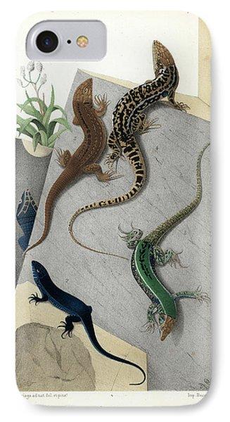 Varieties Of Wall Lizard IPhone Case