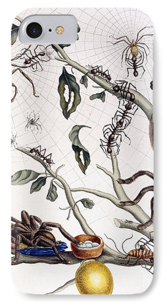Various Arachnids From South America, 1726  IPhone Case