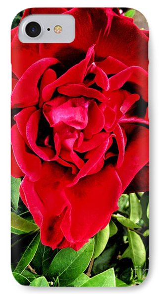 Velvet Red Rose IPhone Case