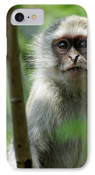Vervet Monkey IPhone Case