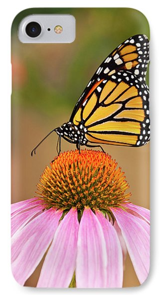 Monarch Butterfly On A Purple Coneflower IPhone Case