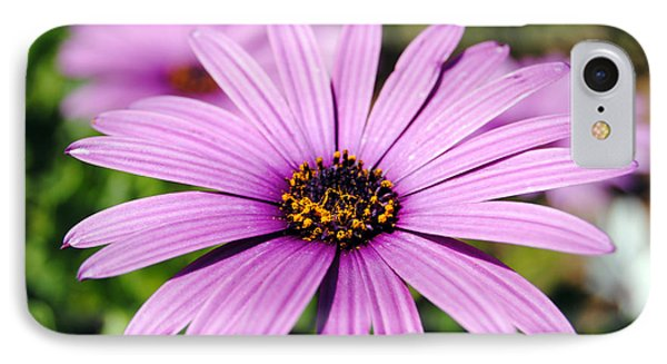 The African Daisy 1 IPhone Case