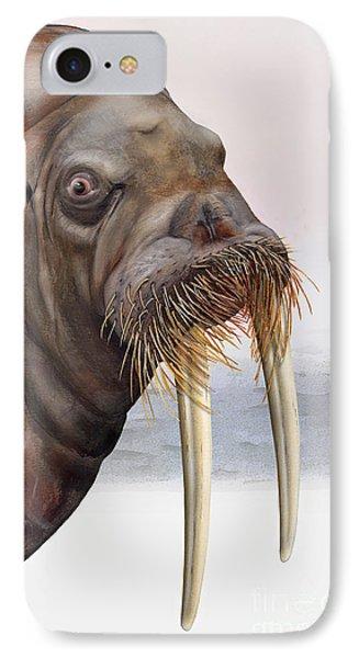 Walrus Odobenus Rosmarus - Marine Mammal - Walross IPhone Case
