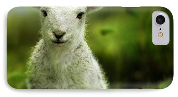 Sheep iPhone 8 Case - Welsh Lamb by Angel Ciesniarska