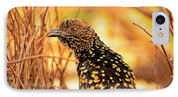 Western Bowerbird IPhone Case