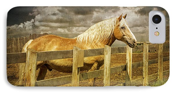 Western Horse In Alberta Canada IPhone Case