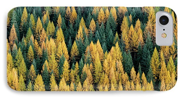 Western Larch Forest IPhone Case