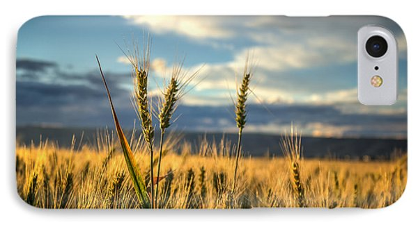 Wheat's Up IPhone Case