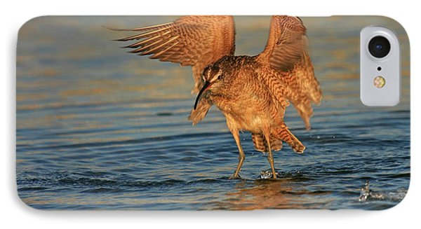 Whimbrel Colors IPhone Case