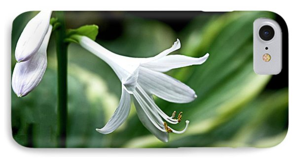 White Lily 1 IPhone Case