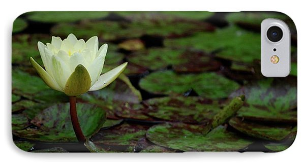 White Lily In The Pond IPhone Case