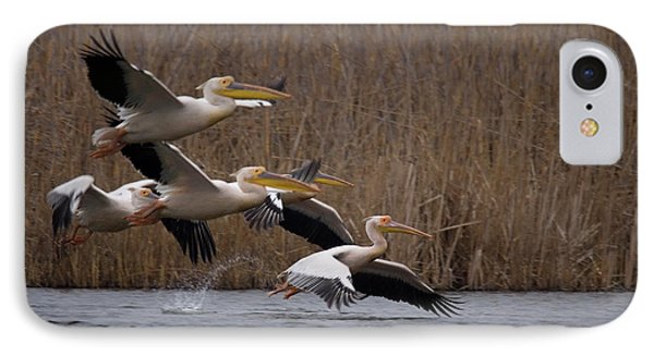 White Pelicans In Flight Over Lake IPhone Case