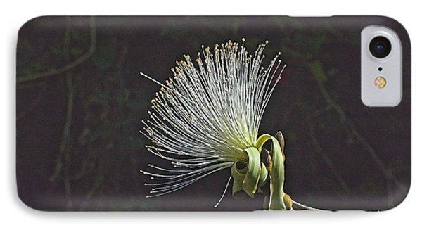 White Shaving Brush Pseudobombax Flower IPhone Case