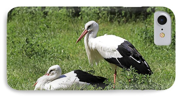 White Storks IPhone Case