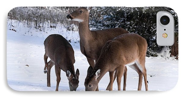 White-tailed Deer - 8855 IPhone Case