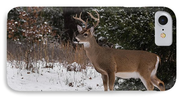White-tailed Deer - 8904 IPhone Case