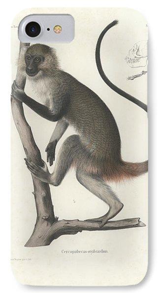 White Throated Guenon, Cercopithecus Albogularis Erythrarchus IPhone Case