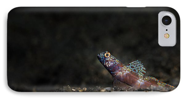 Wide-barred Shrimp Goby IPhone Case