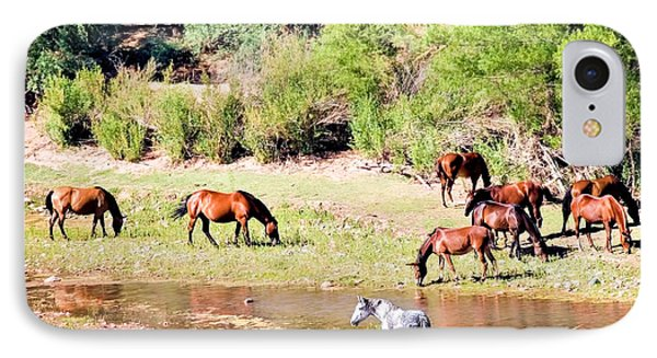 Wild Horses Grazing At Waterhole  IPhone Case