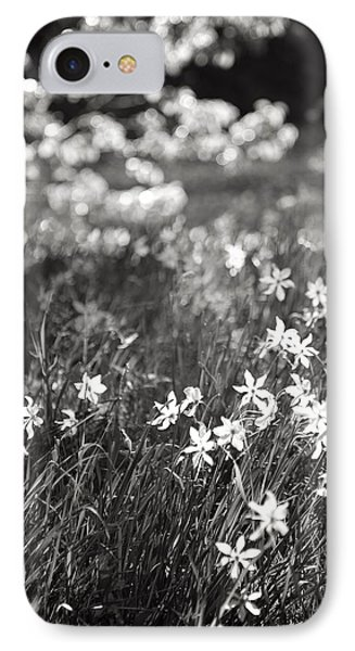 Wild Narcissus At The Forest's Edge IPhone Case