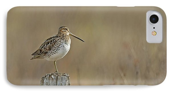 Wilson's Snipe On A Post IPhone Case