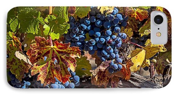 Wine Grapes Napa Valley IPhone Case